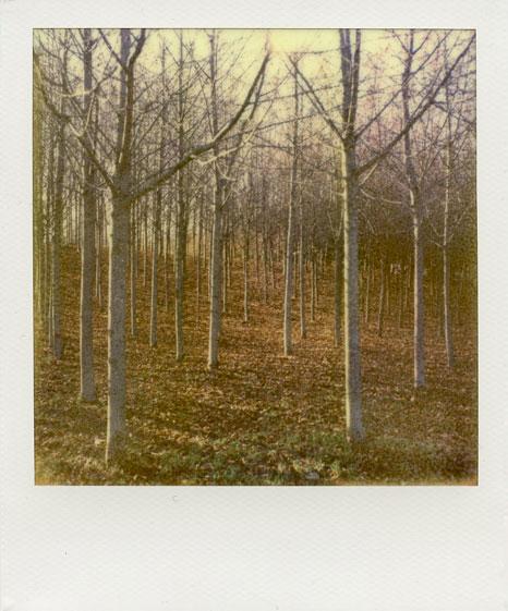 polaroid-vincent-gabriel-paysage-16