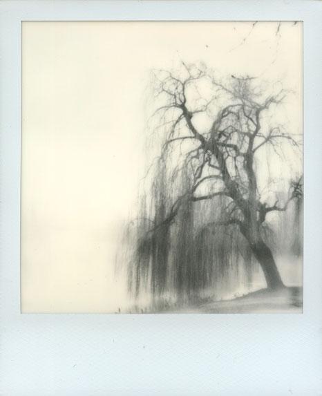 polaroid-vincent-gabriel-paysage-44